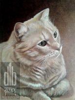 Shelleys Cat