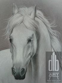 charcoal drawing of white horse