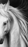 half horseface